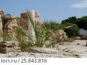 Южное растение на фоне античных руин (2016 год). Стоковое фото, фотограф Татьяна Никитина / Фотобанк Лори