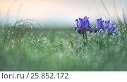 Купить «В россыпи бриллиантов», фото № 25852172, снято 14 апреля 2016 г. (c) Александр Иванов / Фотобанк Лори
