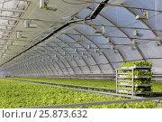 """Купить «Выращивание салата в теплицах агрофирмы """"Выборжец""""», фото № 25873632, снято 31 марта 2017 г. (c) Stockphoto / Фотобанк Лори"""