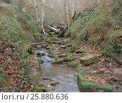 Купить «Лесной ручей в каньоне, природа Кавказского заповедника», фото № 25880636, снято 8 декабря 2016 г. (c) DiS / Фотобанк Лори