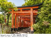 Купить «Beautiful unique red wooden gates in a garden Fushimi inari shrine in Kyoto Japan,», фото № 25905512, снято 23 марта 2019 г. (c) BE&W Photo / Фотобанк Лори