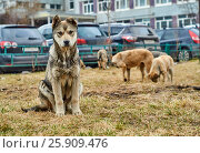 Mongrel dog looking at camera. Стоковое фото, фотограф Георгий Дзюра / Фотобанк Лори