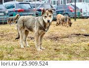 Nice homeless puppy in the city. Стоковое фото, фотограф Георгий Дзюра / Фотобанк Лори