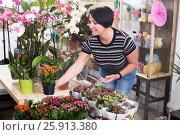 Купить «Woman choosing a potted kalanchoe», фото № 25913380, снято 16 августа 2018 г. (c) Яков Филимонов / Фотобанк Лори