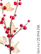 Купить «Christmas decoration with red berries and leafs», фото № 25914336, снято 6 ноября 2011 г. (c) Tatjana Romanova / Фотобанк Лори