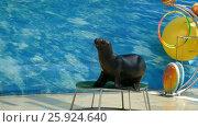 Купить «Performance of fur seals. Show with sea animals», видеоролик № 25924640, снято 11 марта 2017 г. (c) Михаил Коханчиков / Фотобанк Лори
