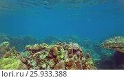 Купить «Corals and fish in Andaman Sea, Thailand», видеоролик № 25933388, снято 6 марта 2017 г. (c) Михаил Коханчиков / Фотобанк Лори