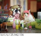 Купить «Funny cat and dog beauty salon. Spa treatments for animals», фото № 25942136, снято 22 января 2018 г. (c) Ирина Козорог / Фотобанк Лори