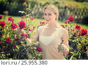 Купить «young female gardener caring roses», фото № 25955380, снято 19 июля 2019 г. (c) Яков Филимонов / Фотобанк Лори