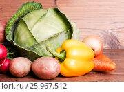 Vegetables. Стоковое фото, фотограф julia Lebed / Фотобанк Лори