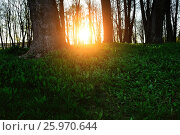 Forest sunset landscape - forest trees with grass on the foreground and sunset light shining through the trees, фото № 25970644, снято 4 мая 2016 г. (c) Зезелина Марина / Фотобанк Лори