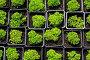 Seedlings of succulents in pots with earth, фото № 25988404, снято 1 августа 2013 г. (c) Юлия Машкова / Фотобанк Лори