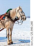 Купить «Лошадь с хомутом и упряжью в зимний день на фоне снежного поля», фото № 25990240, снято 22 января 2019 г. (c) FotograFF / Фотобанк Лори