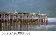 Купить «Beautiful Nature Norway gulls on the old pier», видеоролик № 26000088, снято 29 марта 2017 г. (c) Андрей Армягов / Фотобанк Лори