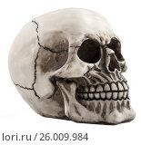 Skull on white background, фото № 26009984, снято 26 июня 2011 г. (c) Tatjana Romanova / Фотобанк Лори