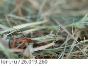 Купить «Shoot of a needle in a haystack», фото № 26019260, снято 12 июня 2011 г. (c) Tatjana Romanova / Фотобанк Лори