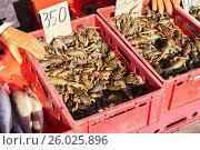 Купить «Живые раки лежат в ящиках на сельскохозяйственном рынке», фото № 26025896, снято 18 июня 2019 г. (c) FotograFF / Фотобанк Лори