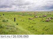 Купить «Выпас сборного стада», фото № 26036060, снято 3 августа 2015 г. (c) Светлана Попова / Фотобанк Лори
