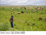 Купить «Пастух наблюдает за выпасом стада», фото № 26036088, снято 3 августа 2015 г. (c) Светлана Попова / Фотобанк Лори