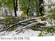 Обильный снегопад весной валит деревья в Молдавии,город Кишинёв (2016 год). Стоковое фото, фотограф Вячеслав Сыпченко / Фотобанк Лори