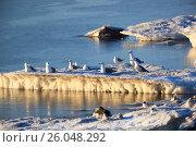 Купить «Чайка. Gull (Larus sp.)», фото № 26048292, снято 15 мая 2014 г. (c) Василий Вишневский / Фотобанк Лори