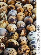 Фон перепелиные яйца. Стоковое фото, фотограф Виталий Федоров / Фотобанк Лори