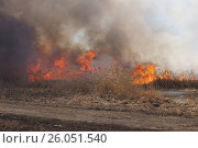 Купить «Пожар. Гравийная дорога вдоль берега реки. Горит камыш.», фото № 26051540, снято 22 апреля 2017 г. (c) Нина Карымова / Фотобанк Лори