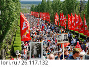 Купить «Volgograd, Russia - May 9, 2016: Procession of local people with photos of their relatives in Immortal Regiment on annual Victory Day on Mamaev Hill in Volgograd», фото № 26117132, снято 9 мая 2016 г. (c) Юлия Олейник / Фотобанк Лори