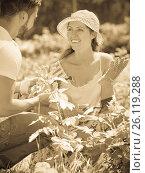 Купить «Family in gloves planting garden plants», фото № 26119288, снято 28 мая 2020 г. (c) Яков Филимонов / Фотобанк Лори