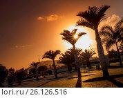 Купить «Palmtrees at dusk», фото № 26126516, снято 16 февраля 2019 г. (c) easy Fotostock / Фотобанк Лори