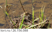 Купить «Лягушка на берегу реки», видеоролик № 26156088, снято 23 июля 2019 г. (c) Евгений Ткачёв / Фотобанк Лори