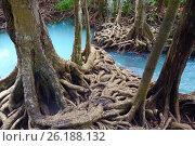 Купить «Mangrove forest», фото № 26188132, снято 27 ноября 2014 г. (c) Татьяна Карасева / Фотобанк Лори