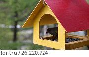 Купить «Кормушка для птиц и ее посетители», видеоролик № 26220724, снято 10 мая 2017 г. (c) Наталья Волкова / Фотобанк Лори