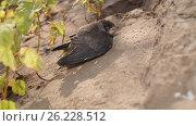Птенец. Стоковое фото, фотограф Денис Сураев / Фотобанк Лори