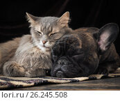 Купить «Dog and cat sleeping together cute hugging each other», фото № 26245508, снято 21 января 2018 г. (c) Ирина Козорог / Фотобанк Лори