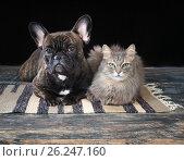 Купить «Dog and cat close by. Expressive portrait of Pets», фото № 26247160, снято 15 ноября 2019 г. (c) Ирина Козорог / Фотобанк Лори
