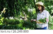 Купить «Woman cutting flower stem in garden», видеоролик № 26249800, снято 22 ноября 2017 г. (c) Wavebreak Media / Фотобанк Лори