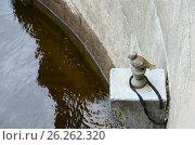 Купить «Памятник Чижику-Пыжику на набережной реки Фонтанки, Санкт-Петербург, Россия», фото № 26262320, снято 3 мая 2017 г. (c) Ольга Коцюба / Фотобанк Лори