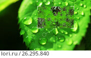 Купить «Microbiology. Microorganisms. Parasites and bacteria on a leaf of a young plant. Video and graphics. HD», видеоролик № 26295840, снято 30 августа 2016 г. (c) ActionStore / Фотобанк Лори