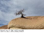 Купить «Одинокое дерево без листьев на скале», фото № 26322620, снято 6 января 2015 г. (c) Юлия Бабкина / Фотобанк Лори