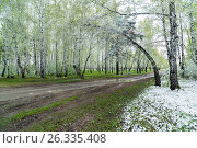 Green leaves of the trees and grass covered with snow. Стоковое фото, фотограф Станислав Сергеев / Фотобанк Лори