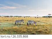 Купить «zebras and other animals in savannah at africa», фото № 26335868, снято 18 февраля 2017 г. (c) Syda Productions / Фотобанк Лори