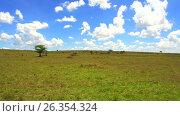 Купить «maasai mara national reserve savanna at africa», видеоролик № 26354324, снято 19 апреля 2017 г. (c) Syda Productions / Фотобанк Лори