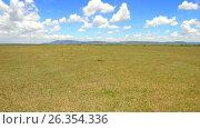Купить «herbivore animals grazing in savanna at africa», видеоролик № 26354336, снято 19 апреля 2017 г. (c) Syda Productions / Фотобанк Лори