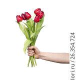 Red tulips in womans hand on white, фото № 26354724, снято 11 марта 2012 г. (c) Tatjana Romanova / Фотобанк Лори