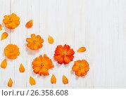 Купить «orange summer flowers on white wooden background», фото № 26358608, снято 11 августа 2016 г. (c) Майя Крученкова / Фотобанк Лори