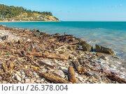 Купить «Черноморский галечный пляж, заваленный мусором и обломками деревьев после шторма. Сочи, Лазаревский район», фото № 26378004, снято 9 сентября 2013 г. (c) Владимир Сергеев / Фотобанк Лори