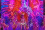 Девушки на сцене во время открытия курортного сезона в Сочи 2017, эксклюзивное фото № 26388076, снято 27 мая 2017 г. (c) Николай Сивенков / Фотобанк Лори