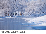 Altai river Talitsa with with couple of swans and reflection of willow trees covered by hoarfrost in water in winter, фото № 26391252, снято 19 января 2017 г. (c) Serg Zastavkin / Фотобанк Лори