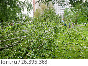 Купить «29 мая 2017 года. Последствия урагана. Поваленное дерево во дворе. Северное Чертаново. Москва», фото № 26395368, снято 29 мая 2017 г. (c) Екатерина Овсянникова / Фотобанк Лори